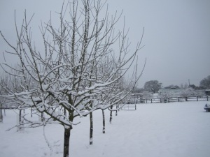 snow pictures 020