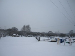 snow pictures 023